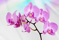 Фотообои 3D цветы (флизелин 416х254) Розовая орхидея (116CN)