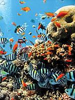 Фотообои 3D природа, море (флизелиновые 206x275 см) Подводный мир во всей  красе (4-005)