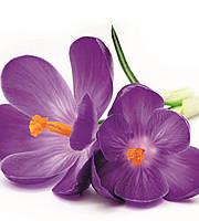 Фотообои флизелиновые 3D Цветы 225х250 см Цветок крокуса (MS-3-0144), фото 1