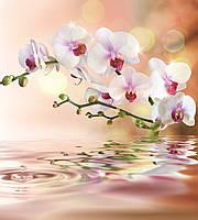 Фотообои флизелиновые 3D Цветы 225х250 см Ветка орхидеи (MS-3-0147)