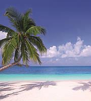 Фотообои флизелиновые 3D Море 225х250 см Пляж и пальма (MS-3-0194)