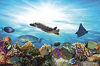 Фотообои флизелиновые 3D Море 375х250 см Рыбы и кораллы (MS-5-0216)