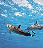 Фотообои флизелиновые 3D Море 225х250 см Дельфины (MS-3-0218)