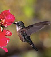 Фотообои флизелиновые 3D Птицы 225х250 см Колибри (MS-3-0230)