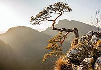 Фотообои 3D Природа (флизелиновые 416х254 см) Дерево на скале  (10511CNVEXXXL)