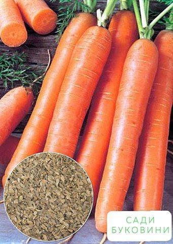 На развес Морковь 'Детская суперсладкая' ТМ 'Весна' цена за 15г