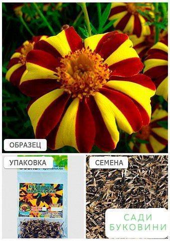 Бархатцы 'Маджестик' (Зипер) ТМ 'Весна' 2г