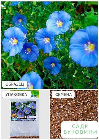 Лен голубой (Зипер) ТМ 'Весна' 3г