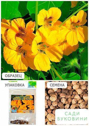 Настурция 'Золотой блеск' (Зипер) ТМ 'Весна' 2г