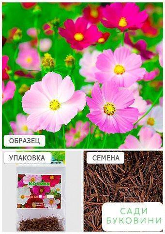 Космея смесь(Зипер) ТМ 'Весна' 1.5г