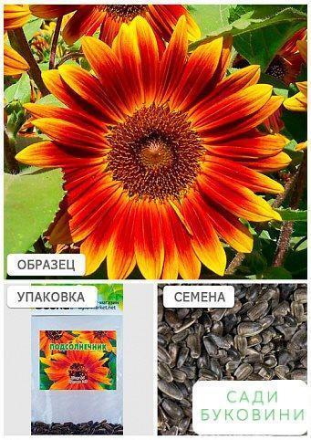 Соняшник помаранчевий (Зипер) ТМ 'Весна' 2г