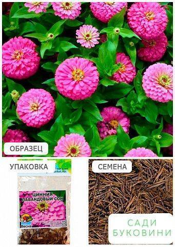 Цинния 'Лавандовый сон' (Зипер) ТМ 'Весна' 2г