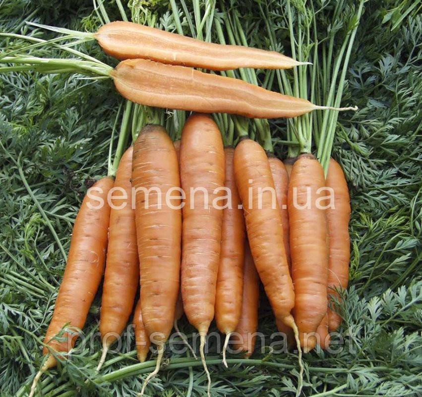 Морква Скарла 500 г.