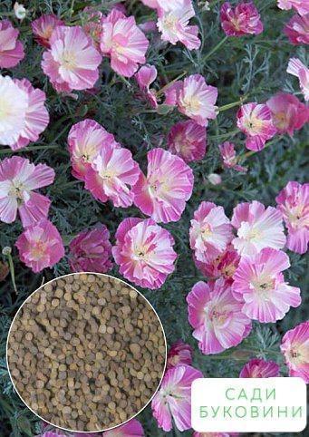 На развес Эшшольция 'Пурпурное сияние' ТМ 'Весна' цена за 4г