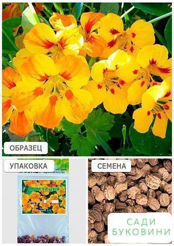 Настурция желтая (Зипер) ТМ 'Весна' 2г