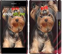 "Чехол на Sony Xperia Z1 C6902 Йоркширский терьер ""929c-38"""