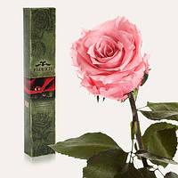 Долгосвежая роза FLORICH РОЗОВЫЙ КВАРЦ 5 карат средний стебель в подарочной упаковке