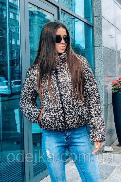 Куртка NN2 леопард