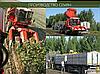 Гибрид кукурузы венгерской селекции Вудсток ГС 210 - ФАО 210 (2019), фото 4