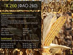 Гибрид Кукурузы Вудсток ТК 260 - ФАО 260 (2019)