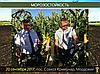 Гибрид кукурузы Вудсток Шаролта (Sarolta) - ФАО 290 (2019), фото 2