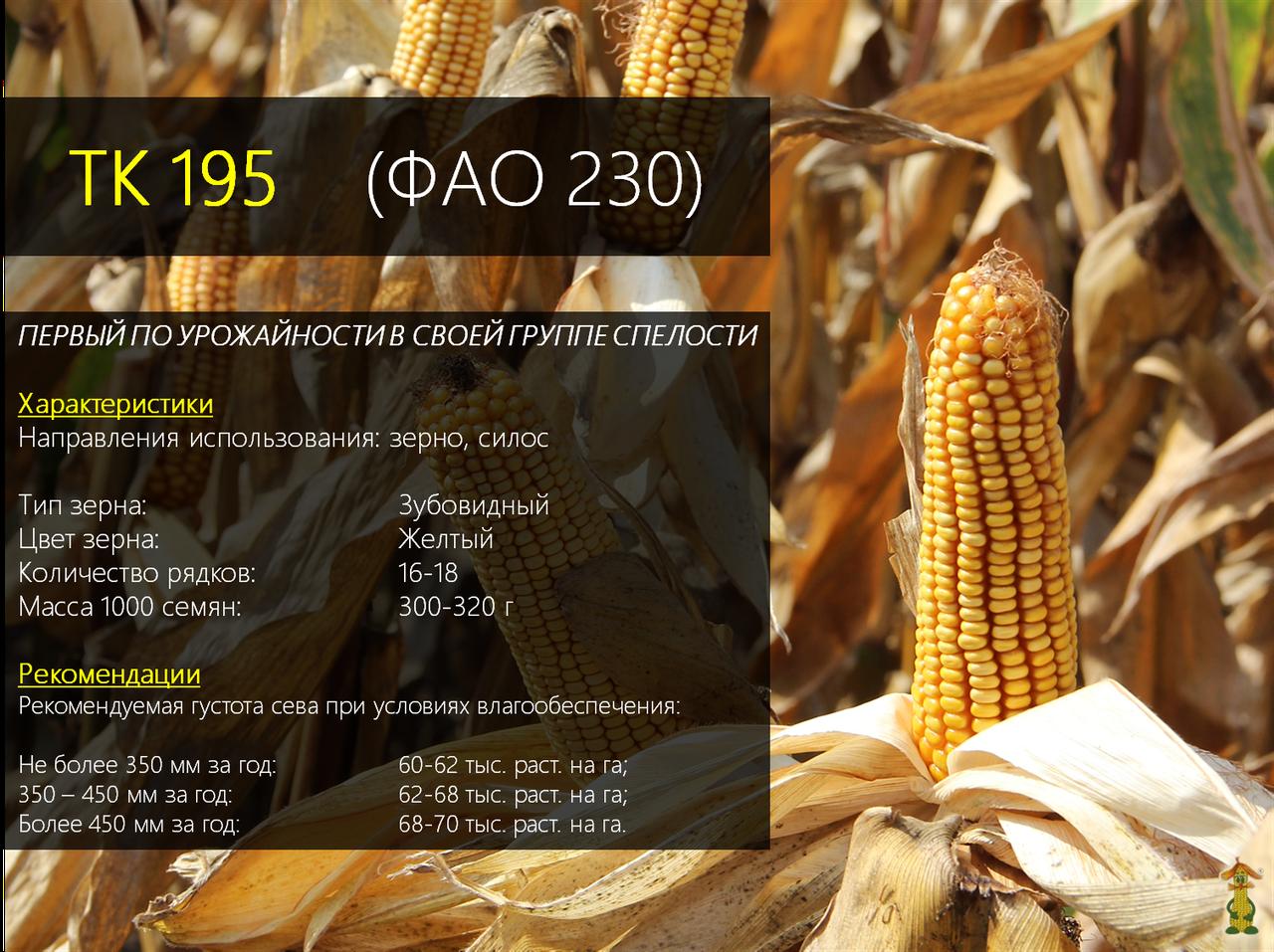 Гибрид импортной кукурузы Вудсток ТК 195 - ФАО 230 (2019)