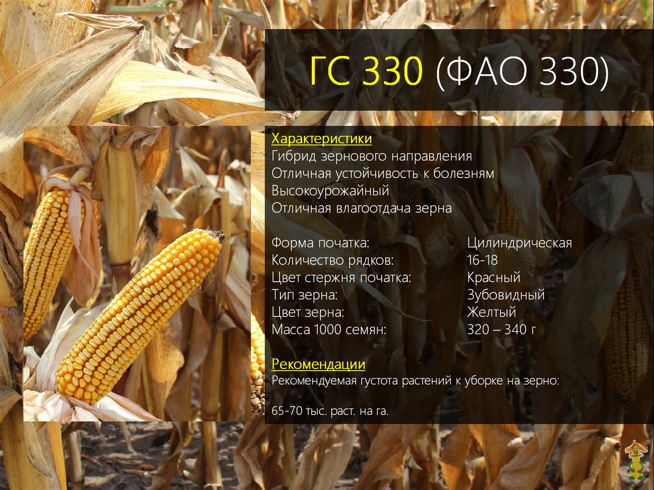 Гибрид кукурузы ГС 330 - ФАО 330 (2019)