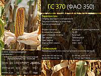 Гибрид кукурузы ГС 370 - ФАО 350 (2019)