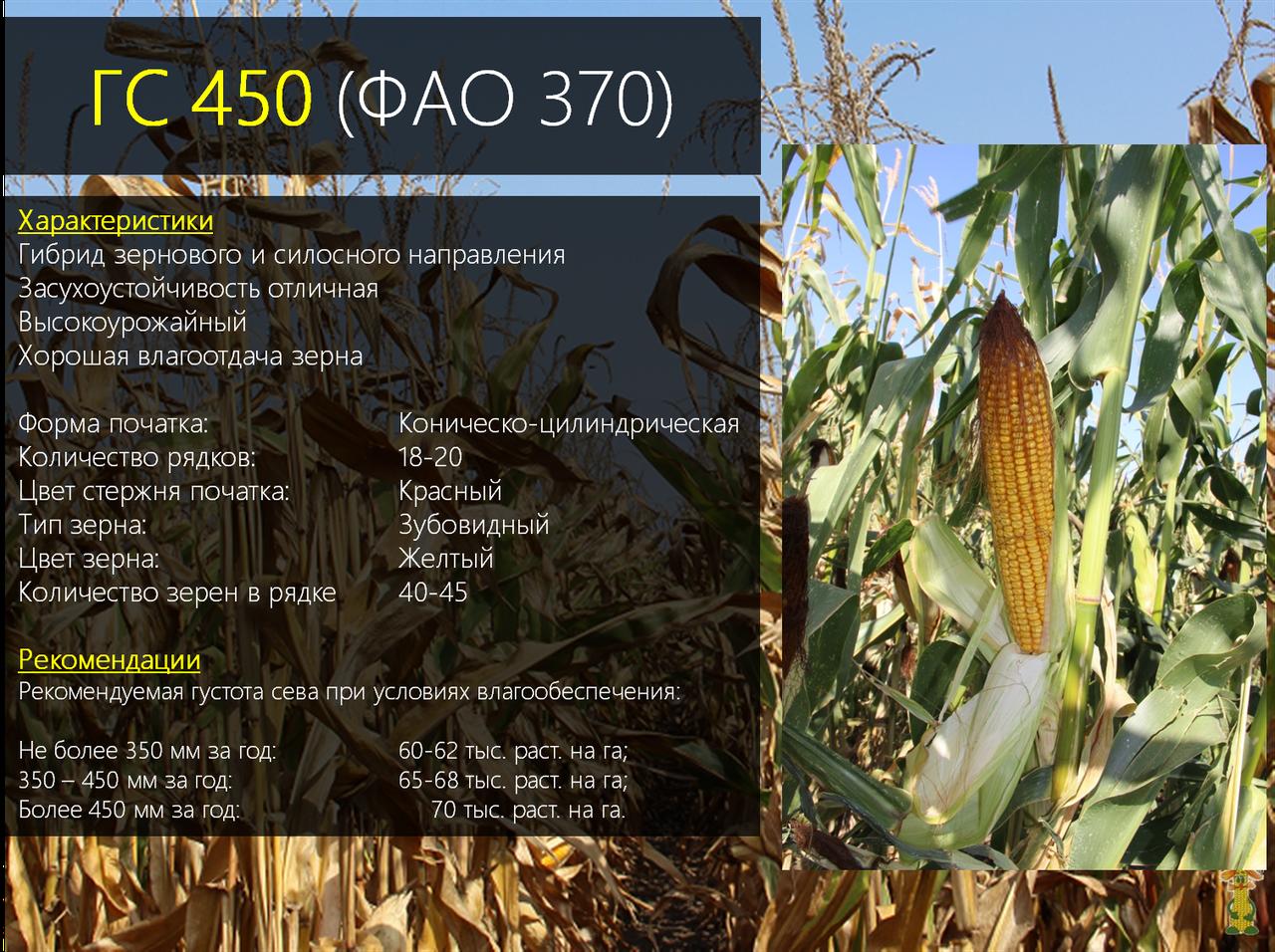 Гибрид кукурузы ГС 450 - ФАО 370 (2019)