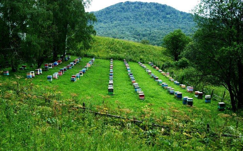 Где лучше ставить пасеку: определение медопродуктивности