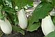 Семена Баклажана  Бибо F1 \ Bibo F1 1000 семян Seminis , фото 4