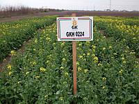 Гибрид озимого рапса ГКХ 0224. Озимый рапс ГКХ 0224 высокоолийный 47%. Вегетация 285-300. Венгрия / 2018г
