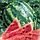 Семена арбуза Кримсон Свит, Clause 100 грамм | профессиональные, фото 2