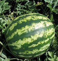 Семена арбуза Кримсон Свит, Clause 100 грамм | профессиональные