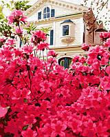 Картина по номерам на холсте Дом в цветах, GX30186