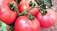 Особенности выращивания сорта томатов Розовый мед