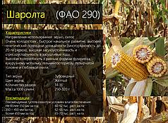 Гибрид кукурузы Вудсток Шаролта (Sarolta) - ФАО 290 (2019)
