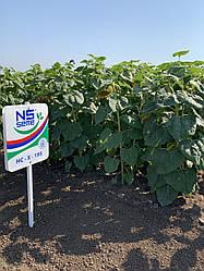Семена подсолнечника НС Х 195 (улучшенный в 2019г) (Экстра)