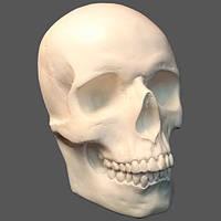 Череп маска з гіпсу на стіну, для декорації, білого кольору, в натуральну величину лицьова частина, фото 1