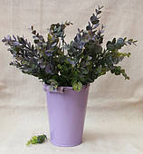 """Зелень """" Эвкалипт , крупные листья   """"  зеленый с фиолетовым"""