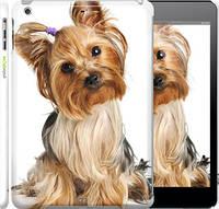 """Чехол на iPad 5 (Air) Йоркширский терьер с хвостиком """"930c-26"""""""