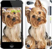 """Чехол на iPod Touch 5 Йоркширский терьер с хвостиком """"930c-35"""""""
