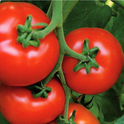 Семена томата Аламина F1 100 сем.