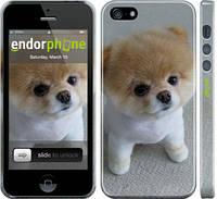 "Чехол на iPhone 5 Boo 3 ""891c-18"""