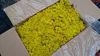 Стабилизированный мох ягель. Упаковка 0.5 кг