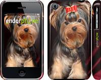 """Чехол на iPhone 3Gs Йоркширский терьер """"929c-34"""""""