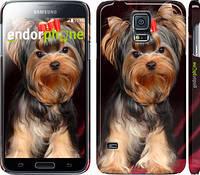 """Чехол на Samsung Galaxy S5 g900h Йоркширский терьер """"929c-24"""""""