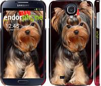 """Чехол на Samsung Galaxy S4 i9500 Йоркширский терьер """"929c-13"""""""