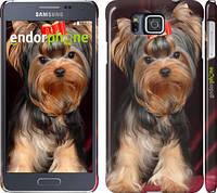 "Чехол на Samsung Galaxy Alpha G850F Йоркширский терьер ""929c-65"""
