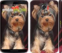 "Чехол на Motorola Nexus 6 Йоркширский терьер ""929c-67"""